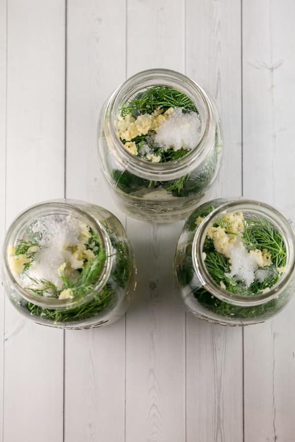 overhead view looking into mason jars filled with garlic, dill, salt, and cucumbers