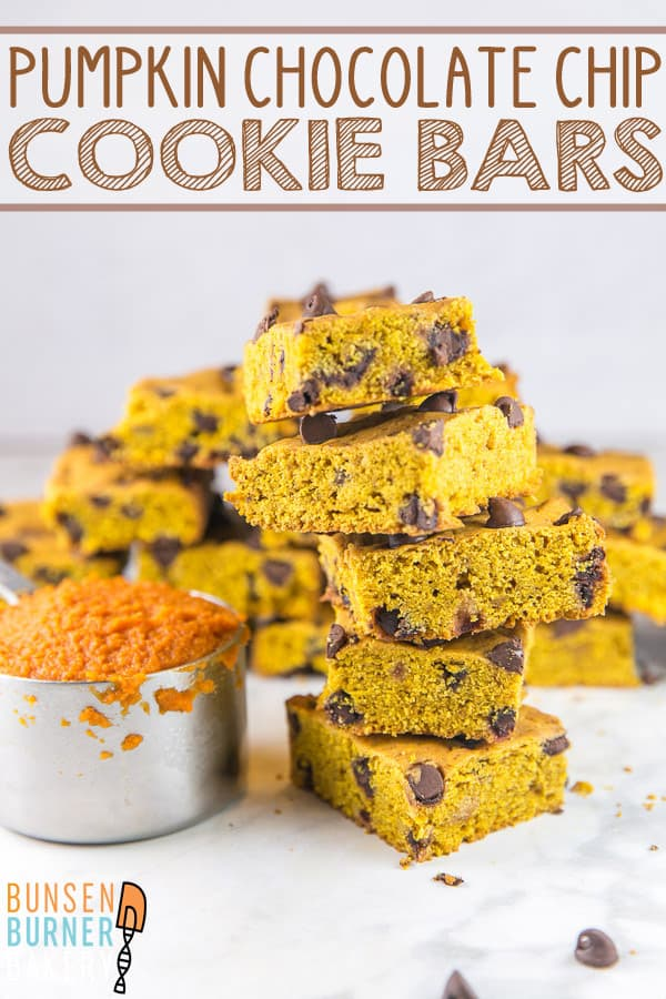 Pumpkin Chocolate Chip Cookie Bars: These easy, one bowl, mix-by-hand chewy cookie bars are perfect for fall and so easy, even the littlest of bakers can help make them! #bunsenburnerbakery #pumpkin #cookiebars #chocolatechip #pumpkinchocolate